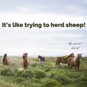 "It's like trying to herd sheep! Picture of horses - above horses it says ""We aren't sheep!"""